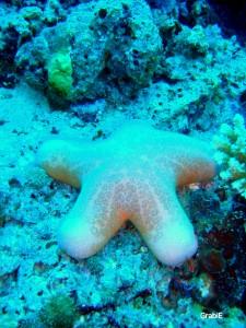 Estrella de mar en Kandolhu Island