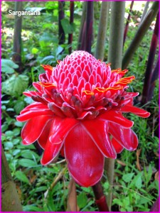 Flora en Costa Rica