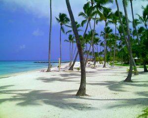 Palmeras en Punta Cana