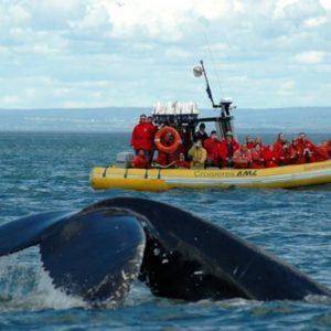 Avistamiento de ballenas Croisieres AML en Baie Sainte Catherine