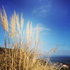 De excursión por los alrededores de la reserva marina de Leigh.