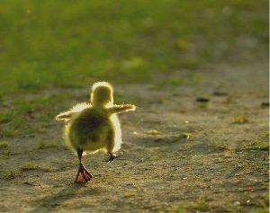 El primer paso es siempre el más difícil, pero también el más importante.