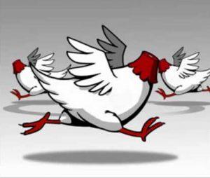 Correr como pollo sin cabeza
