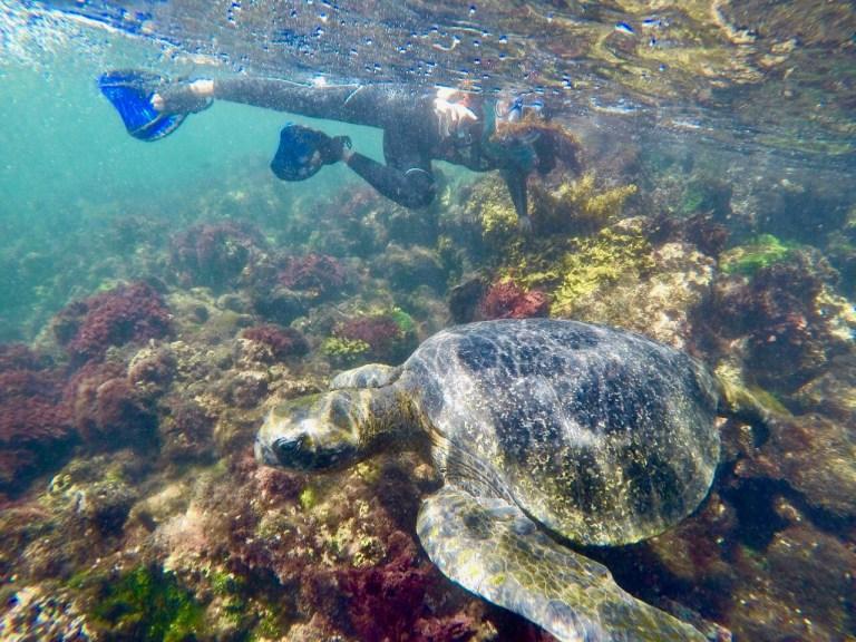 Tortuga Marina en Isla Isabela, Los Túneles (imagen propia)