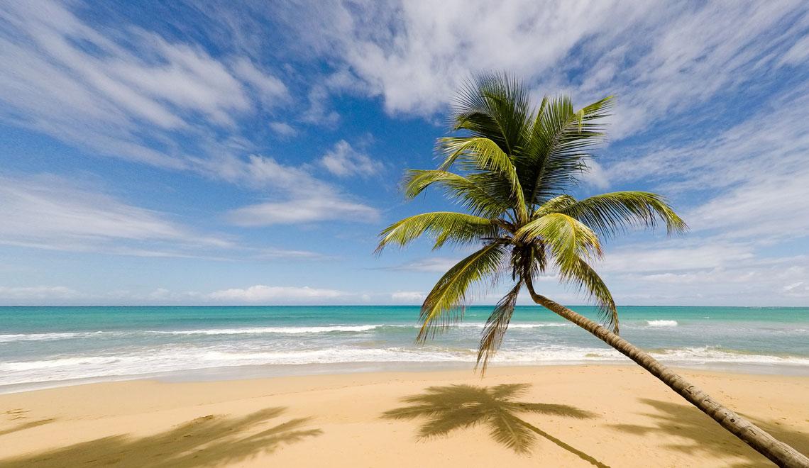 Mi actual hogar, donde las palmeras parecen querer abrazar el mar